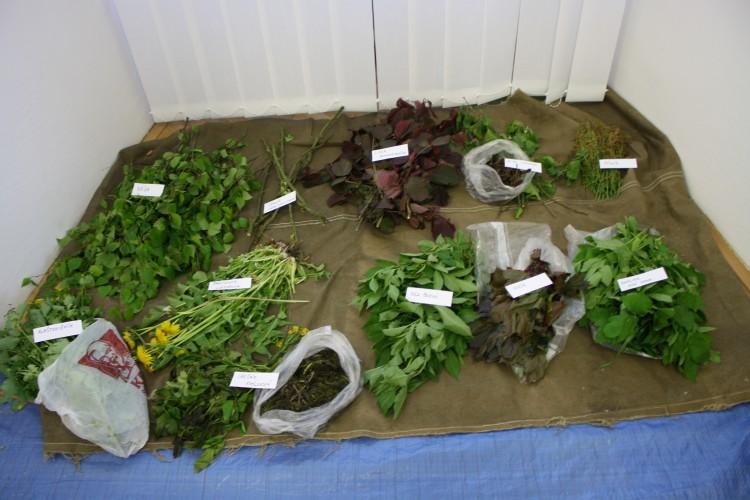 Rostliny k barvení