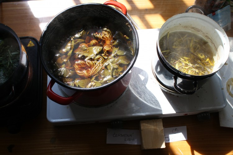 Vaření rostlin 2